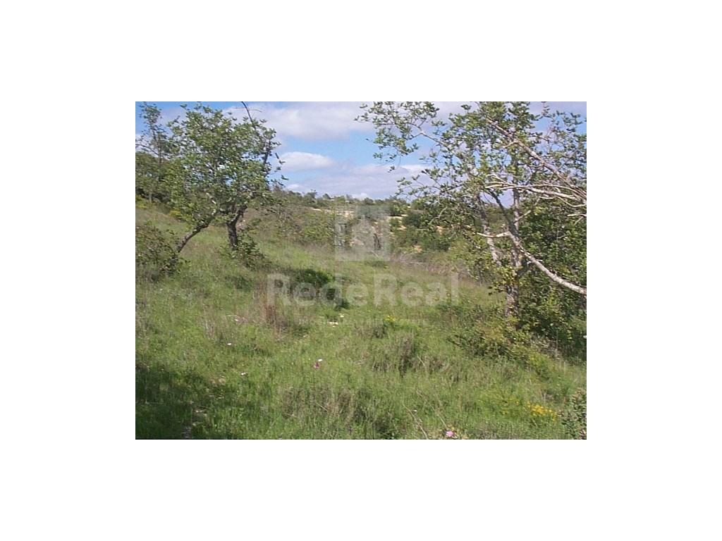 Land em Alfeição (2)