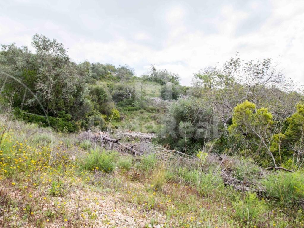 Rural Land in  Bordeira (1)