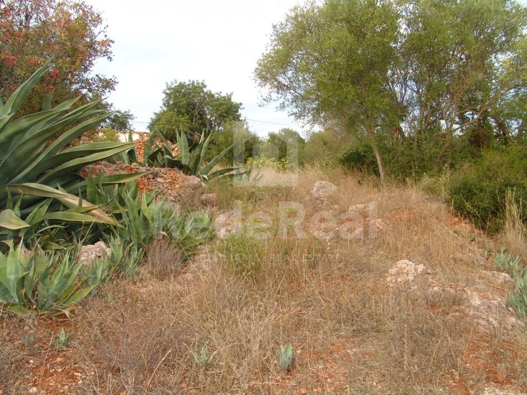 Terrain à Loulé  (6)