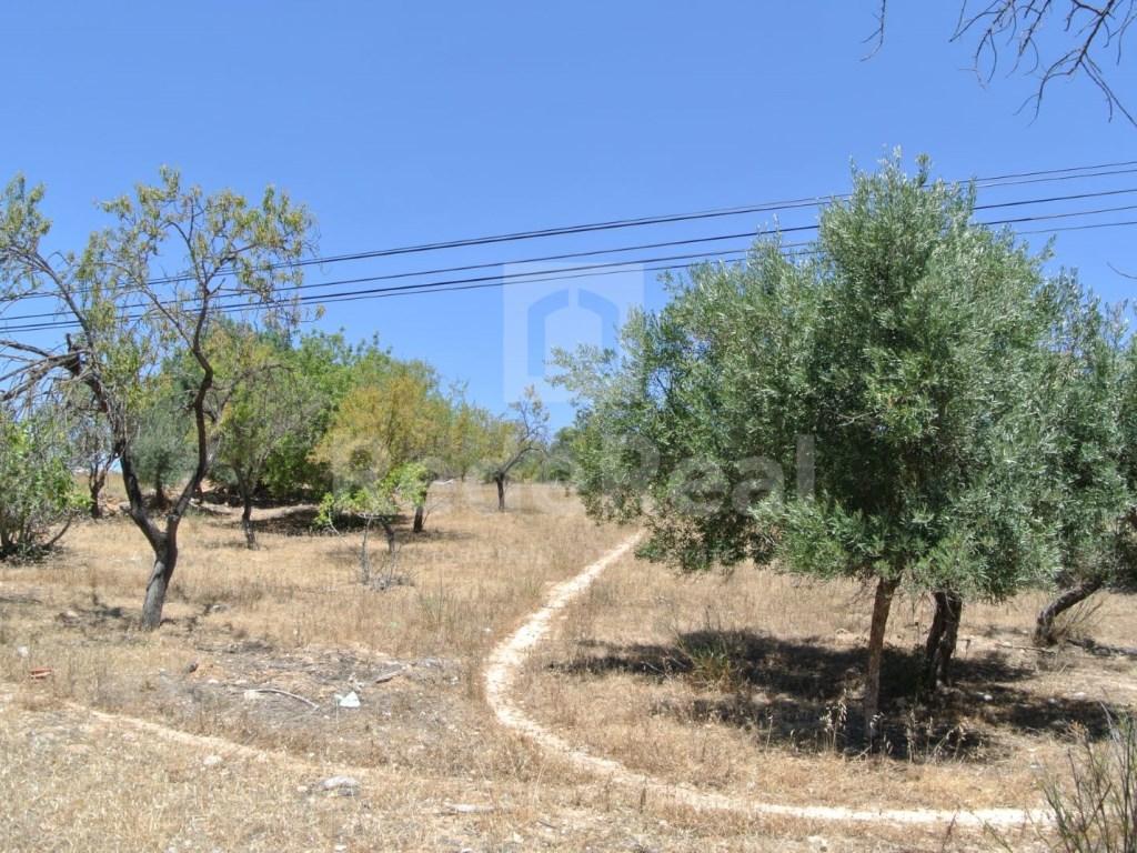 Terrain à Vale de Seixo (2)
