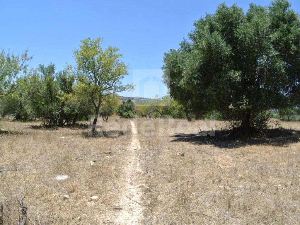 Terrain à Vale de Seixo (4)