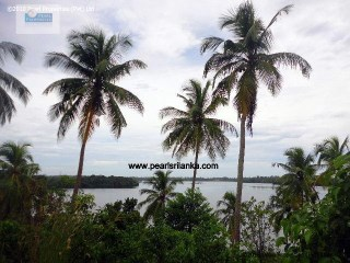 Building Plot › Galle |