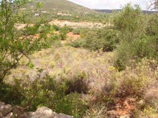 Terrain Rustique Moncarapacho e Fuseta - Acheter