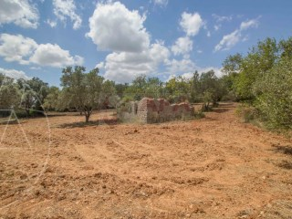 Mixed Land Santa Bárbara de Nexe - For sale