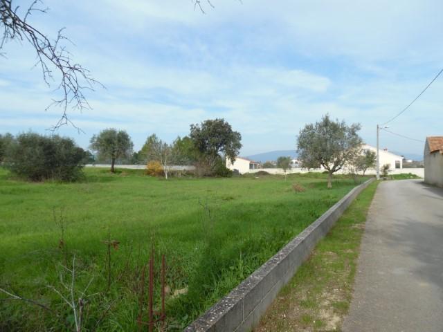 Terreno Urbano  › Brogueira, Parceiros de Igreja e Alcorochel