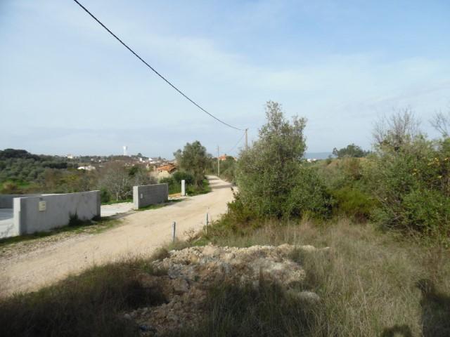 Terreno Misto  › Brogueira, Parceiros de Igreja e Alcorochel