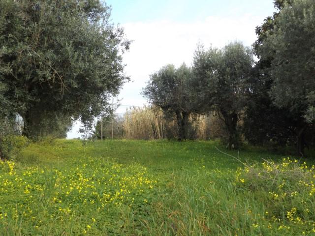 Terreno Rústico  › Brogueira, Parceiros de Igreja e Alcorochel