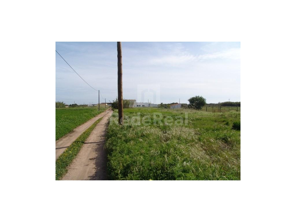 Rural Land in Faro (Sé e São Pedro) (1)