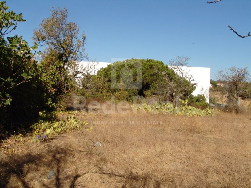 Land in Fonte  Santa (5)