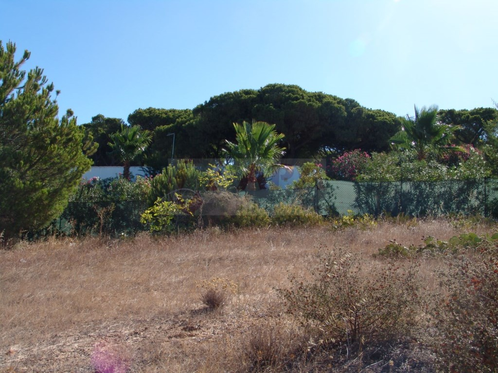 Land in Fonte  Santa (7)