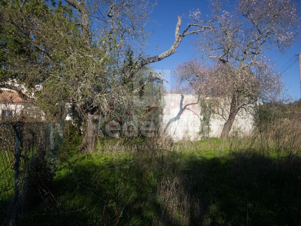 Ruine in Gorjões, Santa Bárbara de Nexe (21)