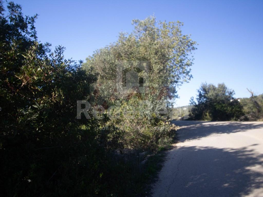 Ruine in Gorjões, Santa Bárbara de Nexe (22)