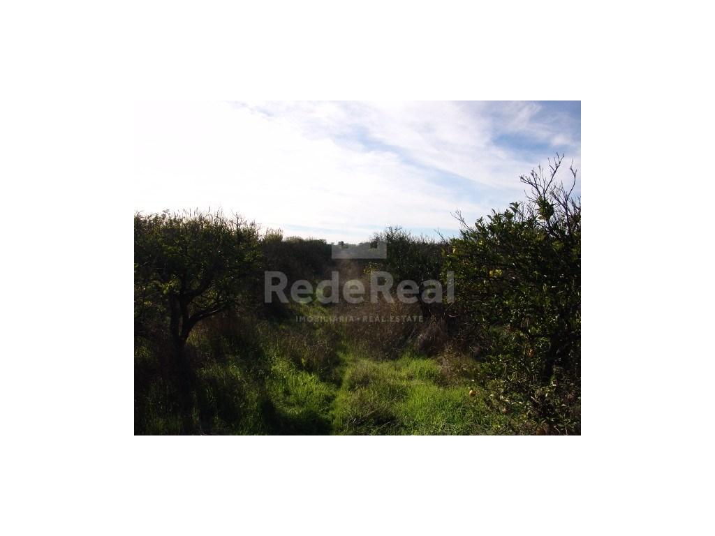 Rural Land  in Bela Salema (1)