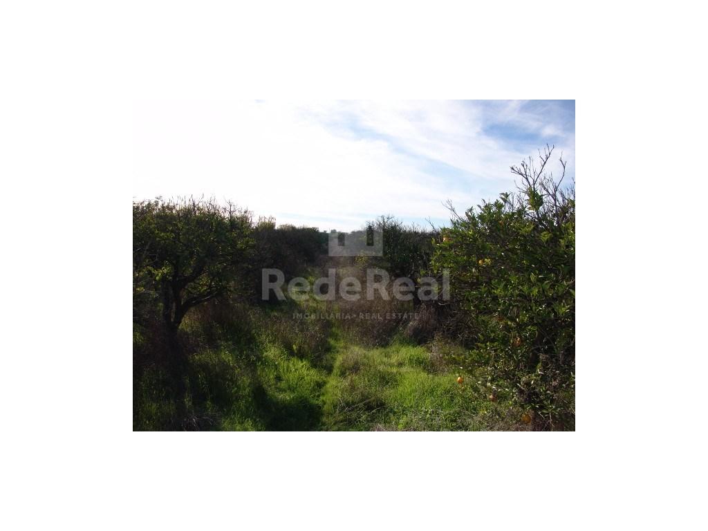 Rural Land  in Bela Salema (2)