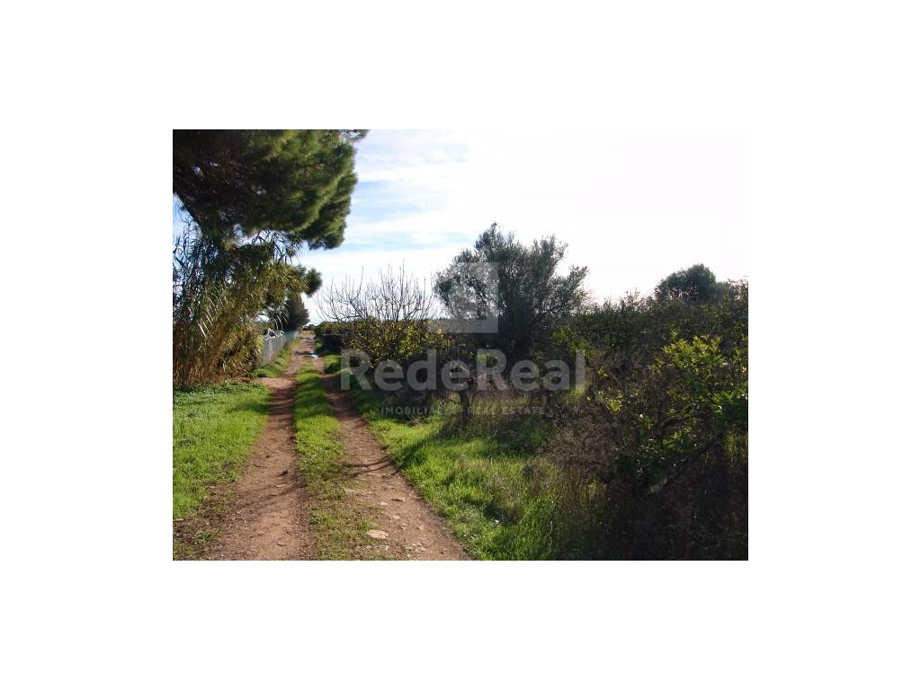 Rural Land  in Bela Salema (3)