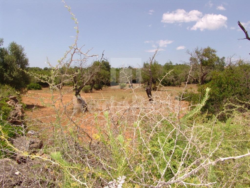 Terrain Rustique Fornalha (1)