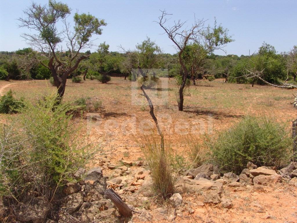 Terrain Rustique Fornalha (2)