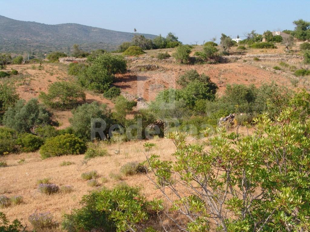 Terrain rustique à Olhão (1)