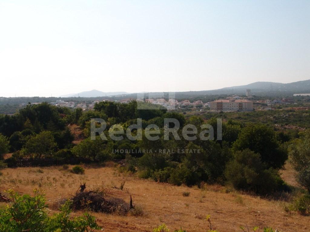Terrain rustique à Olhão (2)