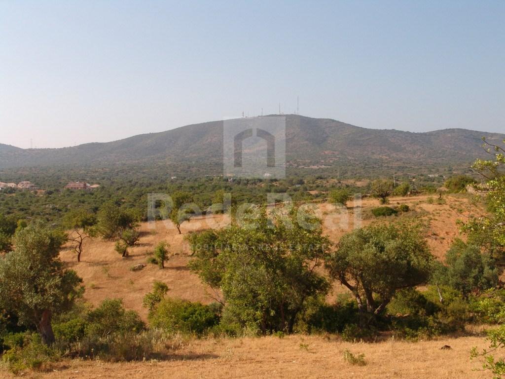 Terrain rustique à Olhão (4)