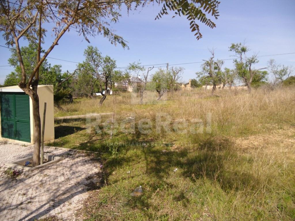 Plot in Pechão  (4)