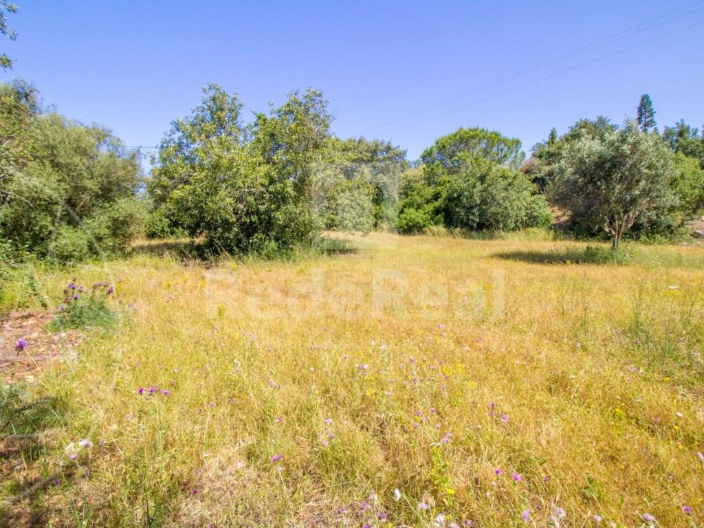 Rustic land in Bordeira (2)