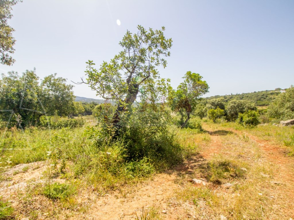 Rustic land in Bordeira (3)