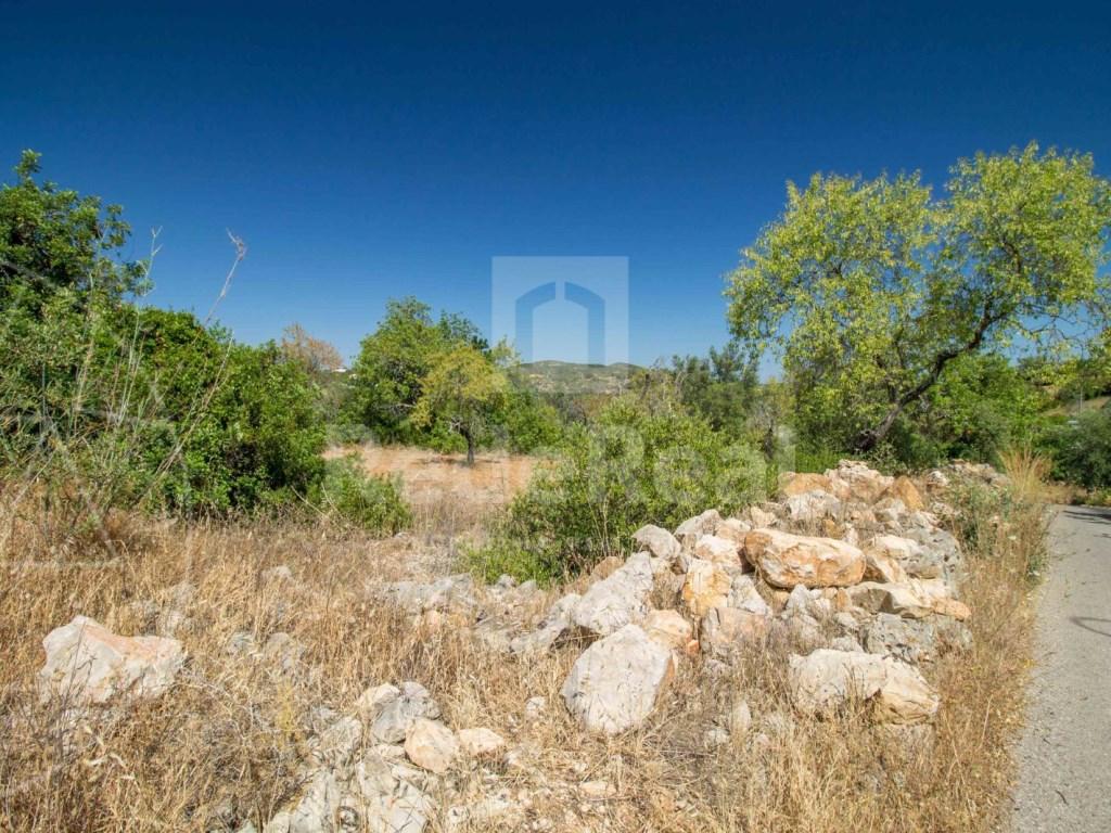 Land rustic santa barbara de nexe (2)