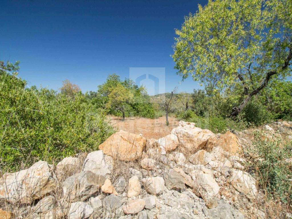 Land rustic santa barbara de nexe (4)