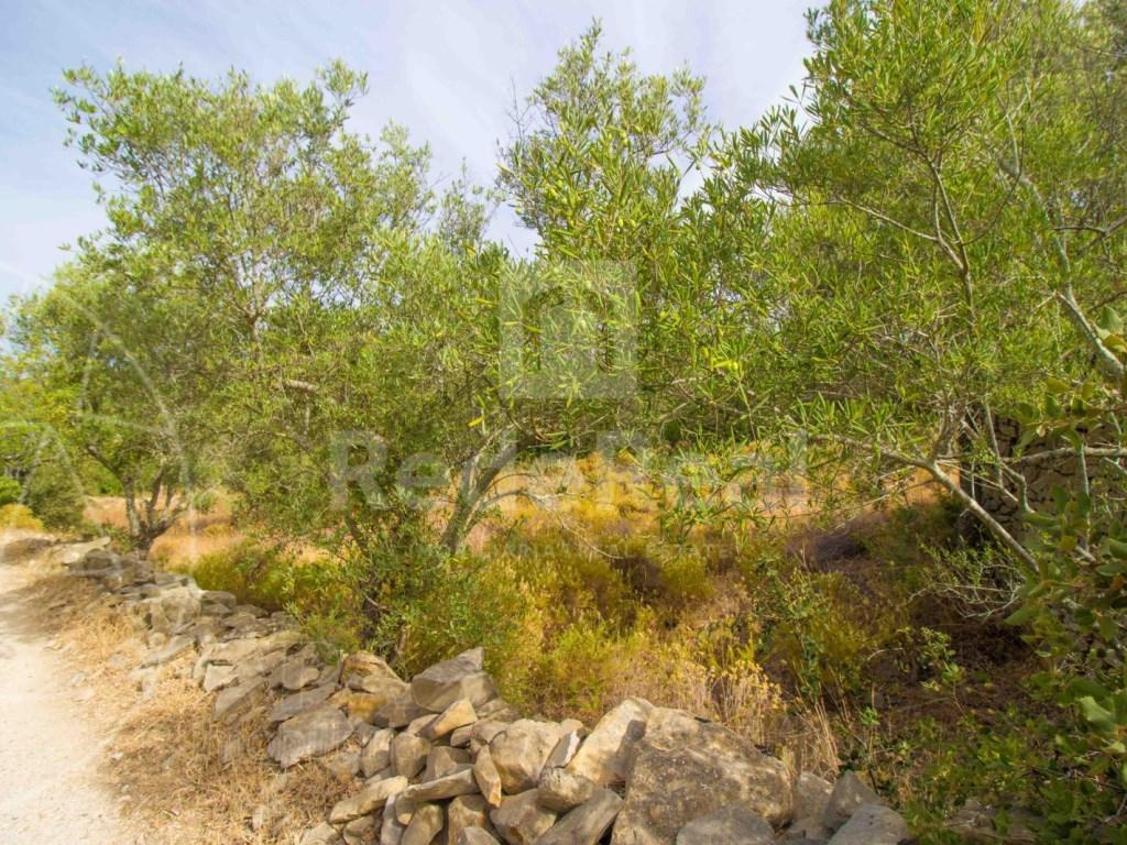 Plot rustic land Faro (3)