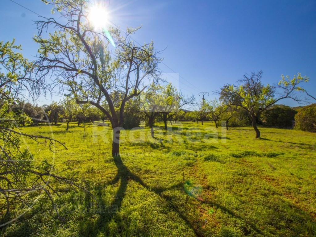 Terreno Rústico in Querença, Tôr e Benafim (2)