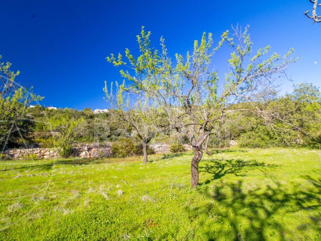 Terreno Rústico in Querença, Tôr e Benafim (1)