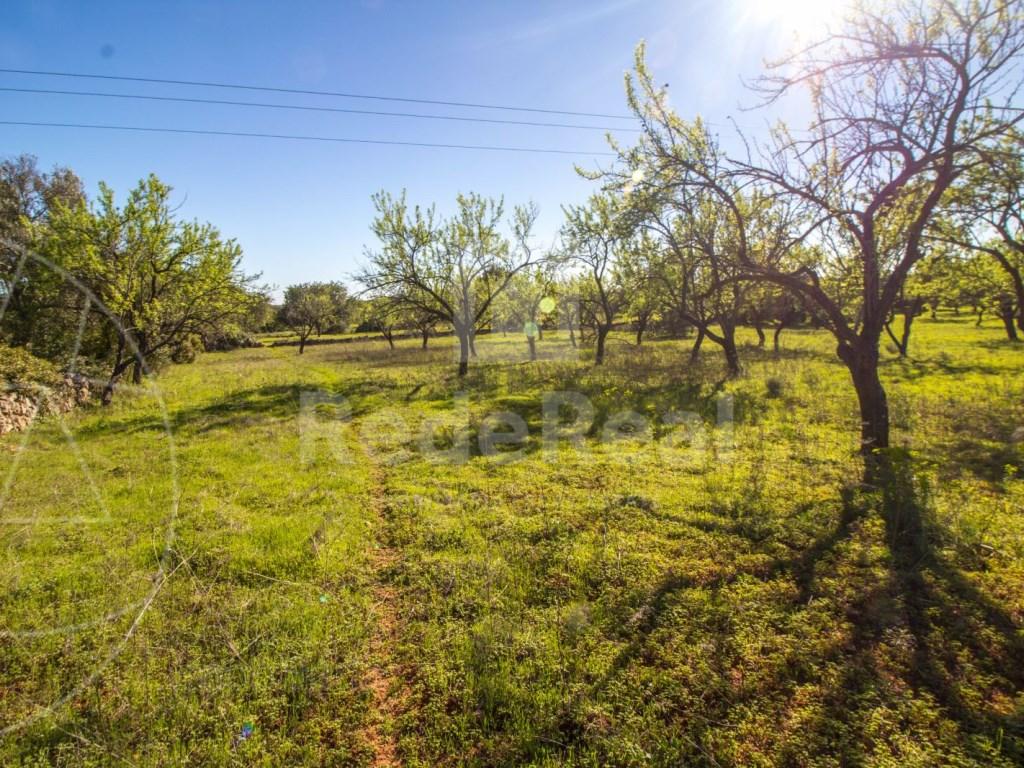 Terreno Rústico in Querença, Tôr e Benafim (6)