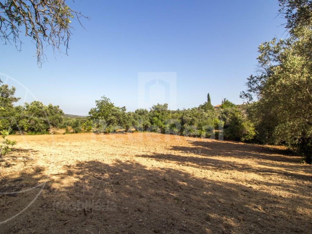 Terrain Rustique in Santa Bárbara de Nexe, Santa Bárbara de Nexe (3)