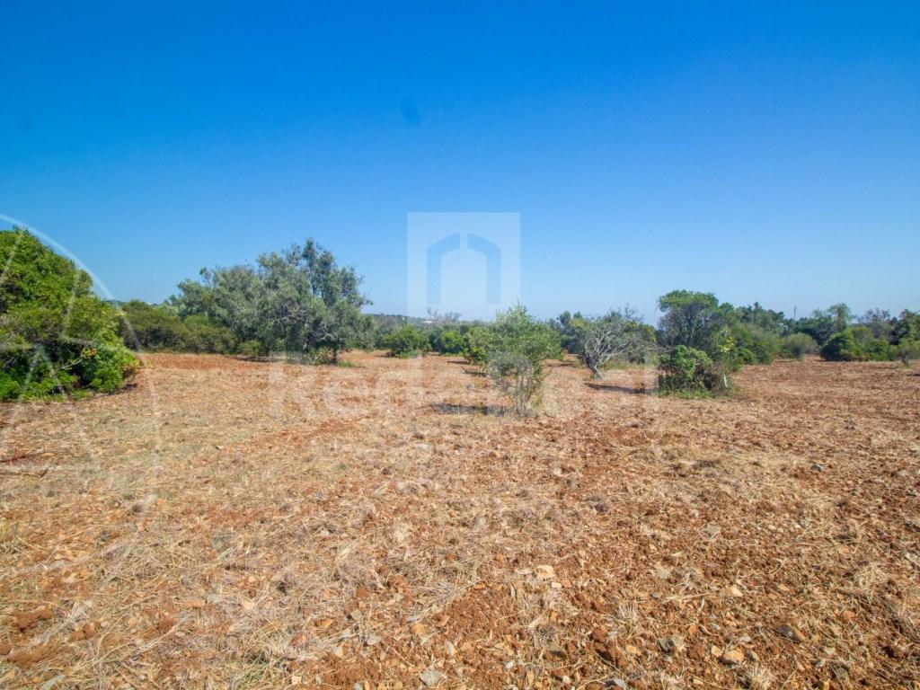 Rural Land in Santa Bárbara de Nexe (1)