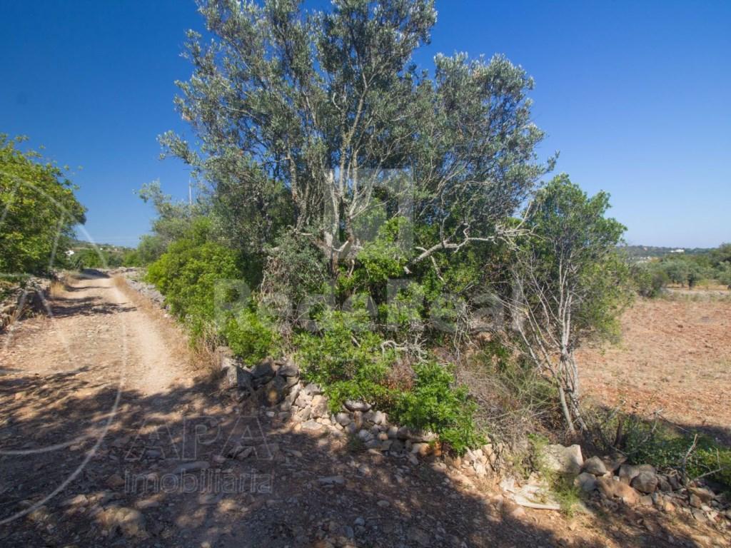 Rural Land in Santa Bárbara de Nexe (3)