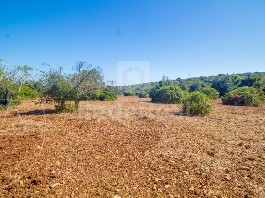 Rural Land in Santa Bárbara de Nexe (4)