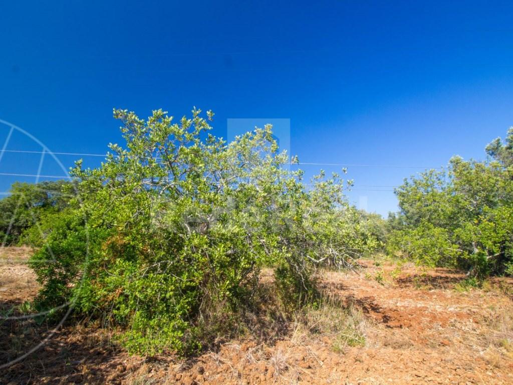 Rural Land in Santa Bárbara de Nexe (6)
