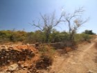 Rustic land with 2200 m ² near Moncarapacho. |