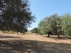 Rustic land with 3520 m ² with view over the Ria Formosa. |