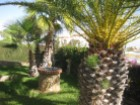 Garden with Palm trees%10/19