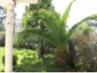 Garden, For sale 4 bedrooms villa, garage, close to the beach and 20 minutes away from Lisbon - Portugal Investe%26/29
