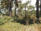 HERDADE DA AROEIRA-PROPERTY LAND GOLF RESORT BEACHS LISBONNE |
