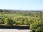 Country Estate, Tavira - Plot%15/30