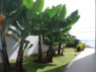 Prime Properties Madeira Real Estate House for Sale Calheta (16)%37/41