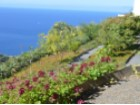 Beautiful villa for Sale Prime Properties Madeira Real Estate (15)%12/26