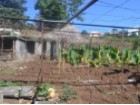 Quinta for Sale in Calheta (3)%4/9