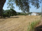 Land with olive trees near the Castelo de Bode lake |