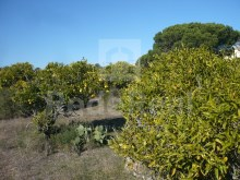 LAND WITH RUIN FOR SALE IN QUARTEIRA%8/16