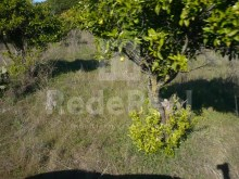 LAND WITH RUIN FOR SALE IN QUARTEIRA%9/16